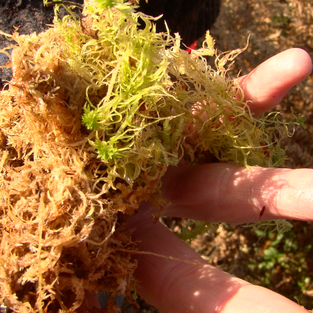 Image credit: Artist Tunde Toth. Sphagnum moss from a raised bog preservation site – exploring natural environments.