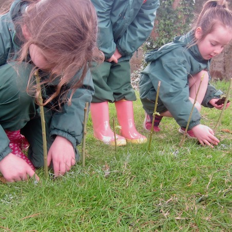 Planting the Willow Cuttings