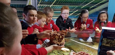 Handling session with staff at Galway Atlantaquaria